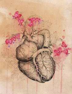 "SALE HUMAN NATURE Anatomy Series ""Number 3"" Bleeding Heart Original 9x12 Watercolor Pencil Vintage Look Drawing. $125.00, via Etsy."