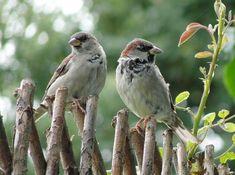 All Birds, Little Birds, Bird Watching, Bird Feathers, Country Life, Beautiful Birds, Bird Houses, The Great Outdoors, Life Is Good