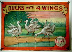 Ducks with 4 Wings