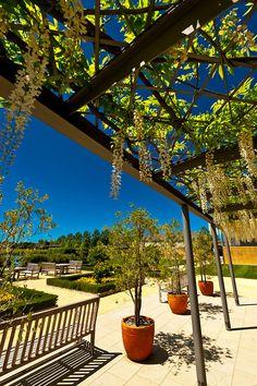 Craggy Range Winery (Te Mata Peak in background), Havelock North, Hawkes Bay, North Island, New Zealand Havelock North, New Zealand North, Wineries, Native Plants, Vineyard, Colorado, Scenery, Birds, Range