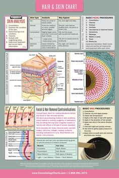 "Skin Care Anatomical Chart - High Gloss Laminated Poster 18""x27"" - Cosmetology Charts"