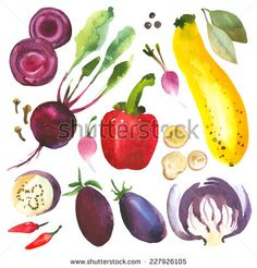 Watercolor vegetables and herbs. Provencal style. Recent watercolor paintings of organic food. Onion, radishes, eggplant, cabbage, zucchini, pepper, bay leaves, beetroot, ginger - stock vector