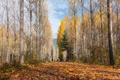 Un universo paralelo. Esfera: Una visión del otoño. Pirineo aragonés.