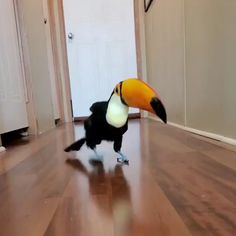 Funny Animal Videos, Funny Animal Pictures, Animal Memes, Videos Funny, Cute Little Animals, Cute Funny Animals, Funny Dogs, Funny Memes, Funny Birds