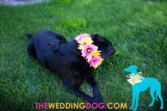 Flower Dog Collar - I would like to make a more subdued version of ...