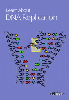 Biology video lessons: DNA Replication  more