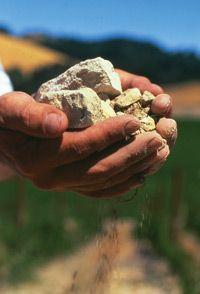 Why Tablas Creek sought out a vineyard full of limestone rocks and soil