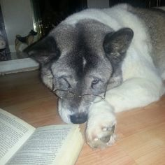 """I don't care about words."" 