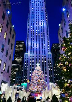 Have you visited New York City during the holiday season? I can give you 10 reasons not to..........                  ... New York City Christmas, Christmas Travel, Christmas Tree Nyc, Manhattan City, Lower Manhattan, Visit New York City, New York City Travel, Rockettes Christmas, Nyc Fall