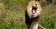 Poacher killed and devoured by a Pride of Lions after he killed their Cub – The Voyager Channel