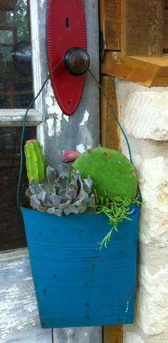 Hang it! Cactus/Succulent