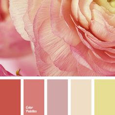 """""""dusty"""" pink color, beige color, bright yellow color, color matching for repair, color solution for house, orange color, pale pink color, pale purple color, pink color, shades of pink, warm colors, warm orange color, yellow color."""