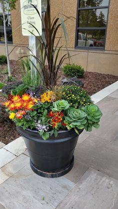 Costco P*T W Perinial Flowers My Diy Projects Garden 400 x 300
