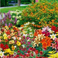 The Butterfly Garden Kit contains 30 perennials. Fills a 5 ft. x 8 ft. Includes lilies, liatris, columbine, daylilies, coneflowers and asclepias. Butterfly Garden Kit, Flower Garden Design, Flowers Garden, Rain Garden, Herb Garden, Garden Pests, Dream Garden, Garden Art, Organic Gardening