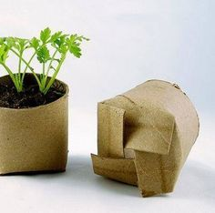Upcycle TP holders for planting