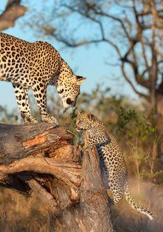 Selvagens ou não, todos os seres vivos buscam a paz e a felicidade.