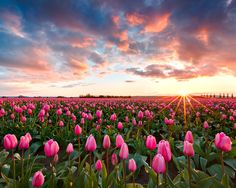 Skagit Valley Tulip Festival | I had the opportunity to get … | Flickr