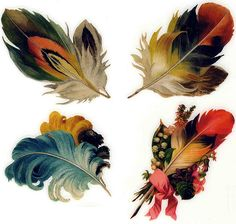 Feathers Feather logos on Etsy beautiful colors https://www.etsy.com/listing/162481215/feather-logo-etsy-logo-designer