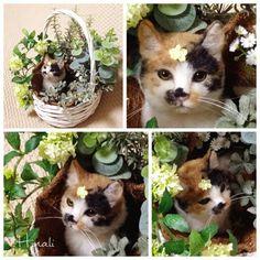 ■ 羊毛三毛猫【NEKOISM2015】入選作品展覧会 の画像 Hinali's blog!