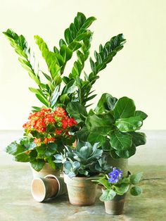 Pick the Right Indoor Plant  If every plant that enters your home seems doomed, try these low-fuss options. We chose tough species for 5 common situations.