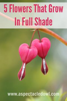 5 Flowers That Grow In Full Shade
