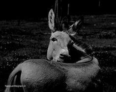 Nanouk Weijnen - Dieren en Kunst - beeldend kunstenares - olieverf schilderijen en bronzen beelden van dieren - Tevens photografie van dieren etc, Fotografie