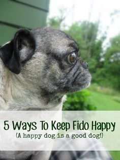 5 ways to keep your dog or puppy happy (because a happy dog is a well behaved dog!). How I prevent potty accidents, obnoxious behavior and inappropriate chewing in my pugs. #barkboxday #ad