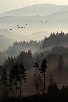 definitelydope: Dukes Pass, Trossachs… by ouldm01 on Flickr.