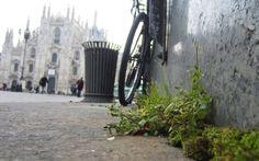La #natura sfida il #cemento della #città! #bioeticonet