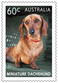 Top Dogs stamps: Max the Miniature Dachshund. #stampcollecting