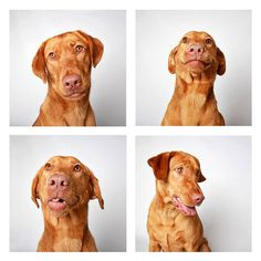humane society of utah photo booth dog pics to increase adoption (4)