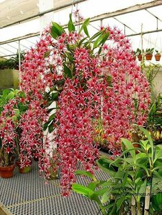 Véu de orquídeas!