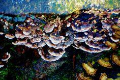 Fungi at Auchinlea, Glasgow
