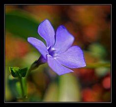 Jardin et Fleurs: bouquet de fleur