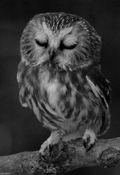 Yes, I'm Cute and I know it ~♛ #owls