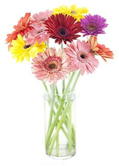 Assorted Gerbera Daisy Bouquet (10 St... $29.62