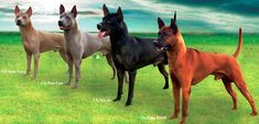 There are alot of different dog breeds that exist around the world. Here I have gathered 15 very rare dog breeds that you probably haven't heard about or seen before. Unique Dog Breeds, Rare Dog Breeds, Akc Breeds, Big Dogs, Cute Dogs, Dogs And Puppies, Doggies, Beautiful Dogs, Animals Beautiful