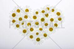 Heart of Daisies - Fotobehang & Behang - Photowall