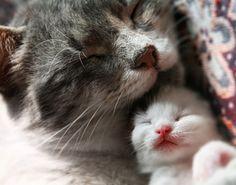 kittiess mrow