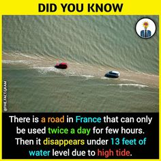 Ideas history facts unbelievable did you know awesome True Interesting Facts, Some Amazing Facts, Interesting Facts About World, Unbelievable Facts, Intresting Facts, Amazing Science Facts, Wow Facts, Real Facts, Wtf Fun Facts