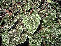 The Tattooed Gardener: Top 10 Houseplants for Low Light - Modern Lighting Sale, Modern Lighting, Easy Care Houseplants, Low Lights, Plant Care, House Plants, Planting Flowers, Plant Leaves, Succulents