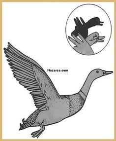 ellerle-ucan-ordek-sekli-golgesi-yapimi Rubrics, Birds, Animals, Animales, Animaux, Bird, Animal, Animais, Paintings