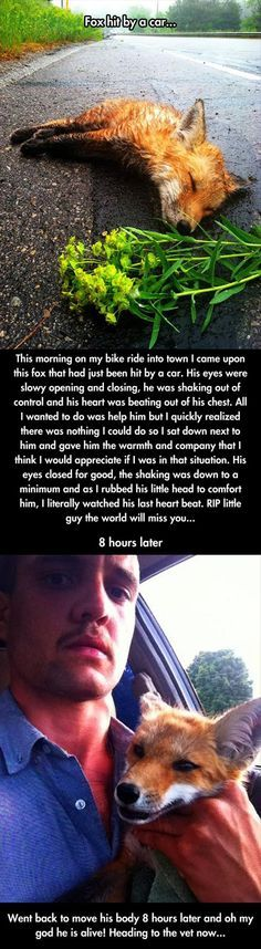 A Man Found A Dead Fox Lying In The Street. When He Returned Later, He Was In Disbelief.
