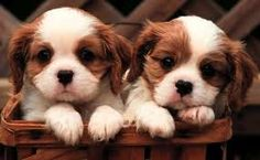 cute dogs - Google Search