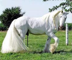 dünyanın en güzel atı - Google'da Ara
