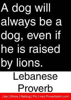 A dog will always be a dog, even if he is raised by lions. - Lebanese Proverb #proverbs #quotes