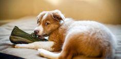 Existem determinados alimentos que não deve dar ao seu cachorro, pois podem ser prejudiciais para ele. Saiba quais aqui! #animais #cachorro