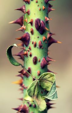 I like colours, I like something beautiful and prefer this with an edge! thorns
