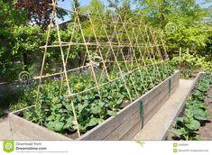 Kitchen Gardens - Google Search