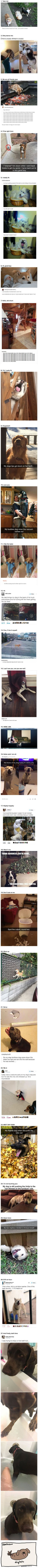 "20+ Hilarious Photos That Will Make You Scream ""I LOVE DOGS!"""